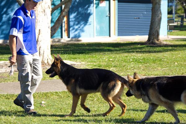 Boarding School The Canine Classroom