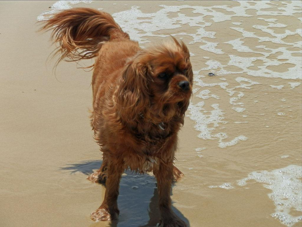 Best Dog Training Brisbane